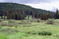 The Blue Range wolf recovery area.